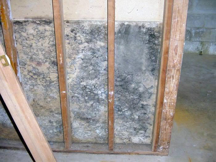 mould health issues in hamilton oakville burlington mould health